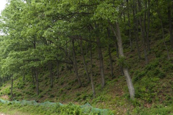 """210205보도자료(""""산소카페 청송군"""", 명품산림 조성으로 지역경제 활성화-숲가꾸기사업).jpg"""
