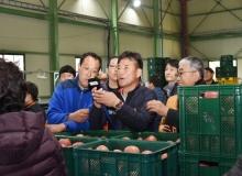 [청송]청송사과유통센터 주왕산APC에 농산물공판장 개장!
